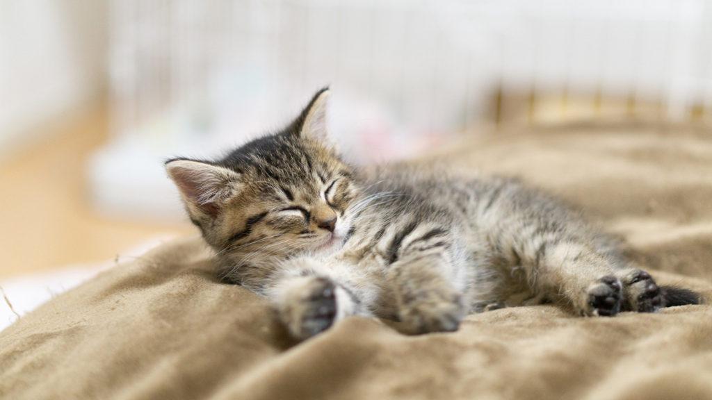 初めて猫を飼うときに必要なグッズ