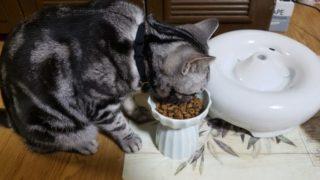 正しい猫のご飯のあげ方は?猫に与えてはいけない食べ物もご紹介します