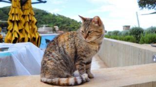 猫が脱走してしまったときの対処法は?猫を拾ったら返さないといけないの?