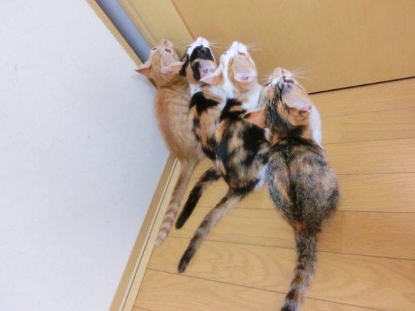 猫がいても旅行はいけるお留守番の方法
