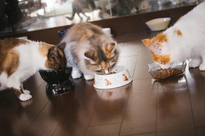 コスパの良い猫のキャットフード